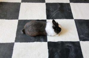 Le lapis expert dans l'art du camouflage